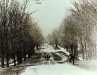Main St. with elms, circa 1893