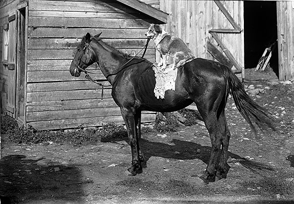 2006.0268.007A-Dog-on-horse.jpg